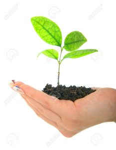 6299610-hand-of-a-woman-holding-new-life-in-form-of-plant-isolated-on-white-stock-photo